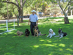 American Canine Education | Classes | Fremont, CA