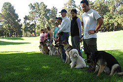 American Canine Education | Training | Fremont, CA