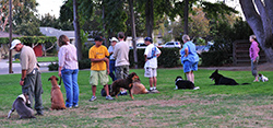 American Canine Education | Fremont, CA